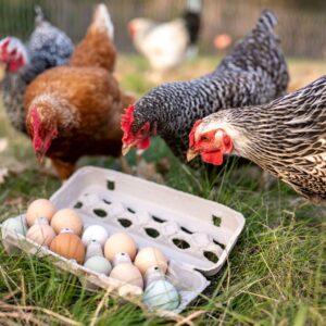 One Dozen Pasture-Raised Eggs