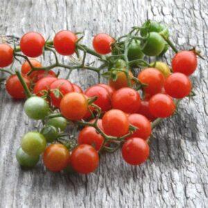 Cherry Tomato Seedling Varieties